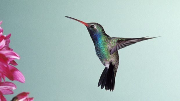 Il SEO è morto? Ecco come funziona Hummingbird