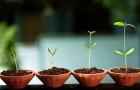 Startup: quando i Social Media aiutano l'innovazione